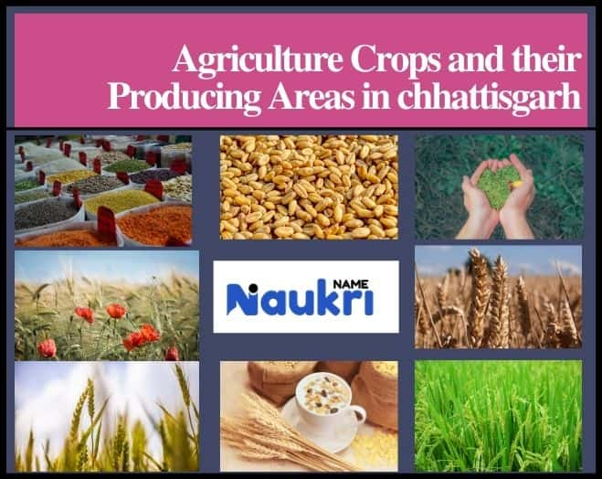 Agriculture Crops and their Producing Areas in chhattisgarh
